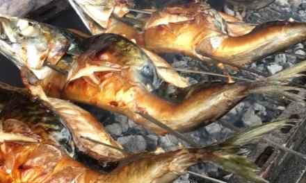 半夏生の丸鯖〜炭火焼❣️